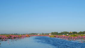 Boat trip to the sea of red lotus, Udon Thani, Thailand stock video footage