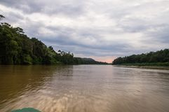 Boat trips along the overgrown jungle of the kinabatangan river,. Sabah, Borneo. Malaysia royalty free stock photo