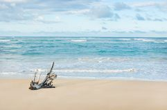 Boat on a tropical beach. Fisherman boat and palm on a tropical beach Stock Images