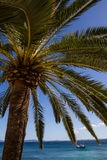 Boat under palm tree Stock Photo