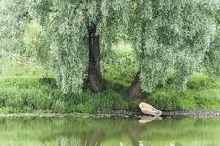 Boat under a willow stock images