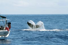 Boat and whale tail Royalty Free Stock Photos