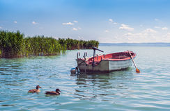 A boat and wild ducks floatinf in the waters of lake Balaton in Royalty Free Stock Images