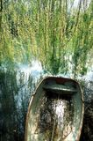 Boat and willow at the water`s edge. Old boat full of water, on the shore, under the hanging branches of the weeping willow Stock Images
