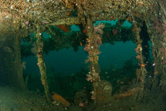 Boat wreck in Ambon, Maluku, Indonesia underwater photo Royalty Free Stock Images
