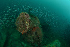 Boat wreck, schooling fishes in Ambon, Maluku, Indonesia underwater photo Stock Photography