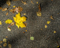Boatautumn yellow leaves lie on the asphalt road. Boat near swampedautumn yellow leaves lie on the asphalt road in the sunlight lake shore Royalty Free Stock Image