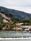 Boaters in Arashiyama during the cherry blossom season. Japanese tourists enjoy going out onto the river in boats in Arashiyama, Kyoto, Japan during the spring Royalty Free Stock Photography
