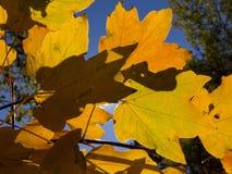 Boati φθινοπώρου sun_2 φύλλων φθινοπώρου bakgraund teaf Στοκ φωτογραφία με δικαίωμα ελεύθερης χρήσης
