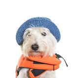 Boating Dog. A dog ready for a day of boating wearing his bright orange life jacket and his blue sun hat Royalty Free Stock Photo