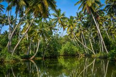 Poovar Lake, Kerala, India Stock Photo
