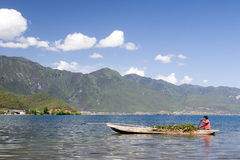 Boatman in Chinese Lake. A local farmers gathers plants from the crystal clear waters of Lugu Lake in northern Yunnan province, southern China Stock Photo
