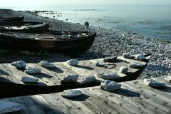 Boats. On the shore of gotland stock image