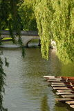 Boats. On the Cam river, Cambridge Royalty Free Stock Images