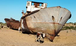 Boats in desert - Aral sea. Boats in desert around Moynaq, Muynak or Moynoq - Aral sea or Aral lake - Uzbekistan - asia Stock Photo