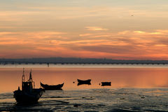 Boats of fish at sunset Stock Photography