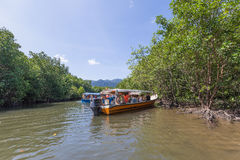 Boats on mangrove tour royalty free stock images