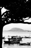 Boats moored in Rio de Janeiro. Black and white scenic view of boats moored along coastline of Rio de Janeiro city with silhouetted tree in foreground, Brazil Stock Photography