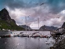 Boats near moorage in Reine village Royalty Free Stock Photo