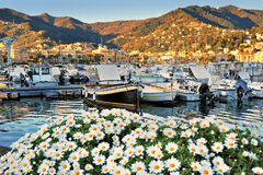 Boats in port of Santa Margherita Ligure with margherita flowers Royalty Free Stock Photos