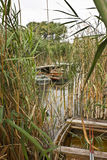 Boats in the reeds Stock Images