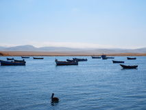 Boats. Resting calmy inside a peruvian reserve for nature Stock Photo