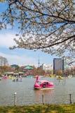 Boats on Shinobazu Pond at Ueno Park. TOKYO, JAPAN - MARCH 29: Boats on Shinobazu Pond at Ueno Park on March 29, 2016 in Tokyo, Japan. Ueno Park is the most Royalty Free Stock Image