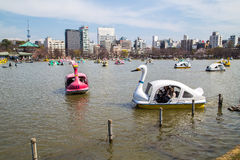 Boats on Shinobazu Pond at Ueno Park Royalty Free Stock Photo