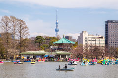 Boats on Shinobazu Pond at Ueno Park Royalty Free Stock Image