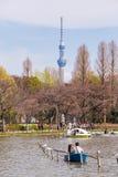 Boats on Shinobazu Pond at Ueno Park. TOKYO, JAPAN - MARCH 29: Boats on Shinobazu Pond at Ueno Park on March 29, 2016 in Tokyo, Japan. Ueno Park is the most Royalty Free Stock Photo