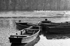 Boats and swans Royalty Free Stock Images