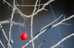 Bobber de la pesca enredado en las ramas de árbol secadas Fotografía de archivo