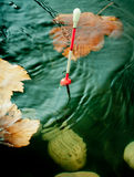 Bobber float in water with yellow leafs. Royalty Free Stock Photos