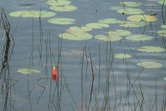 Bobber solitário da pesca Imagem de Stock