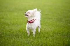 Bobbi draagt hond stock foto's