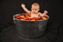 Bobbing for Apples. Baby bobbing for Apples in a Washtub Royalty Free Stock Photos