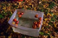 Bobbing for apples on a beautiful autumn evening. Bobbing for apples in front of a haunted house in Ann Arbor, Michigan Stock Photo