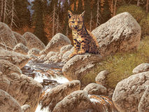 Bobcat. Image from an original painting by Larry Jacobsen. / AF-015 royalty free illustration