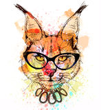Bobcat character colorful portrait Stock Photography