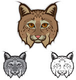 Bobcat Faces. Illustration of bobcat faces in color, grayscale and black and white Royalty Free Stock Photo