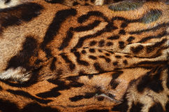 Bobcat fur Royalty Free Stock Images