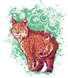 Bobcat on a green background Royalty Free Stock Images