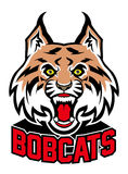 Bobcat head mascot Royalty Free Stock Photos