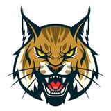 Bobcat head. Vector illustration of angry bobcat face. Can be used as mascot Royalty Free Stock Photography