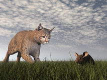 Bobcat hunting mouse - 3D render Royalty Free Stock Photo