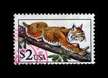 Bobcat lynx, circa 1995, Stock Image