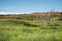 Bobcat Ridge. Meadow and dead cottonwood tree in front of red rock bluff formation known as Bobcat Ridge in North Eastern Colorado Front Range in the late spring Stock Image