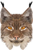 Bobcat. Vector and low poly  illustration of a bobcat. Excelent for a print on t-shirt Royalty Free Stock Photo