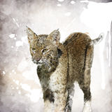 Bobcat Watercolor Immagini Stock