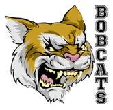 Bobcatsmaskot Royaltyfri Foto